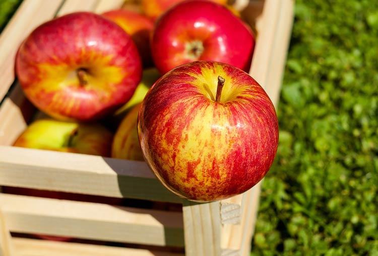 fruta congelada IQF-Blendtec-manzana